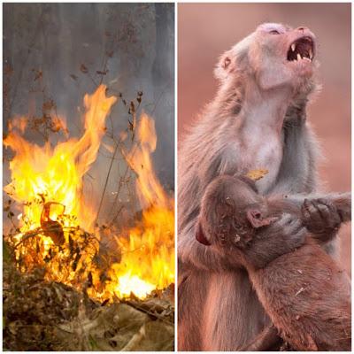Resultado de imagem para amazônia pegando fogo