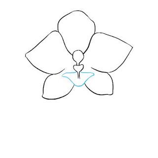 تعليم الرسم خطوة بخطوة - رسم زهرة الأوركيد
