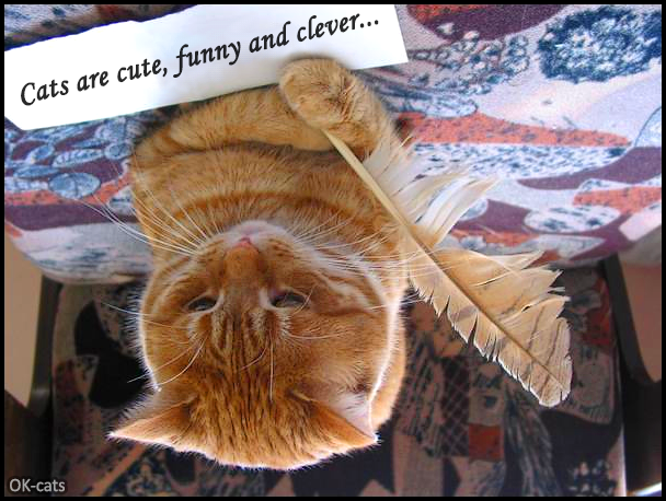 """Photoshopped Cat picture • Amazing cat wrote """" Cats are cute, funny and clever."""""""