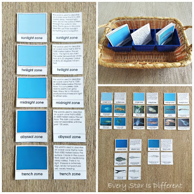 Layers of the Ocean Fish Sorting Activity (Free Printable)