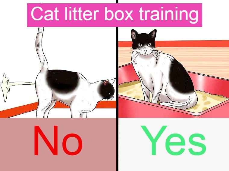 litterbox