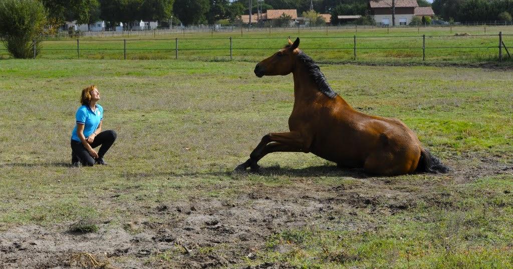 mon cheval me dit la r cup ration du cheval de sport apr s l 39 effort. Black Bedroom Furniture Sets. Home Design Ideas