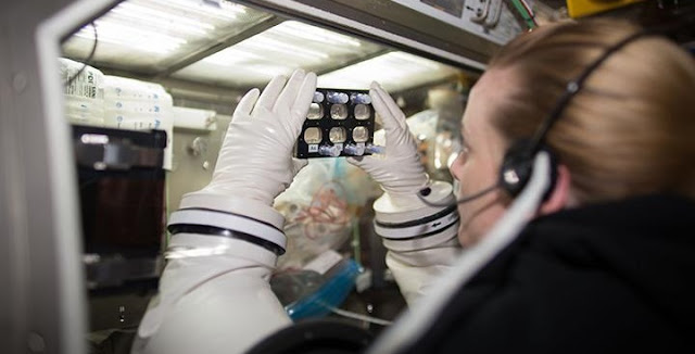 Aboard the International Space Station, Astronaut Kate Rubins examines hiPSC-derived cardiomyocytes grown within a fully enclosed cell culture plate. Credit: NASA