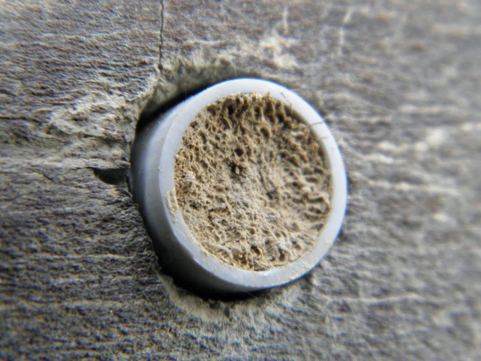 die tonbauenden hymenopteren arten weilmuensters wespen und bienen an stein und lehmwaenden. Black Bedroom Furniture Sets. Home Design Ideas
