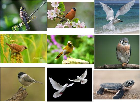 مجموعات الطيور