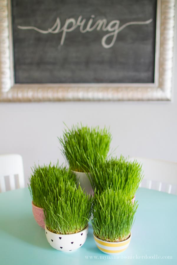 I am loving this!  How darling is this grass decor...and it's REAL!  It grows in 7 days and is absolutely too fun for spring!  Get the details over at mynameissnickerdoodle.com