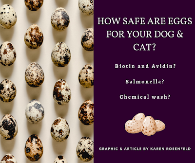 How safe are eggs for your dog and cat? Myths and truths about bioton, salmonella and chemical egg wash