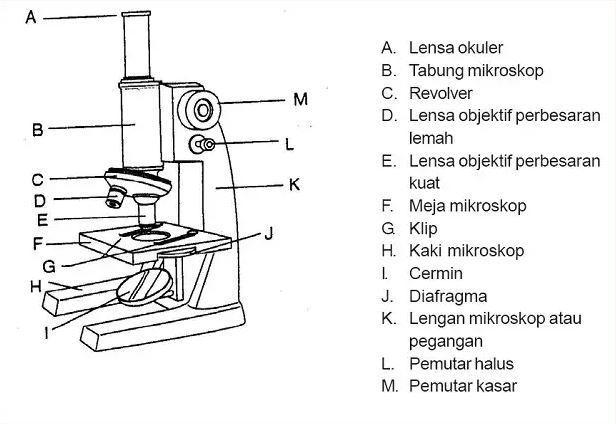 Fungsi Mikroskop Beserta Struktur, Bagian-Bagian, dan Prinsip Kerjanya