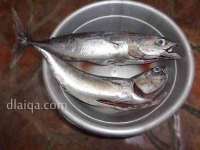 cuci bersih ikan