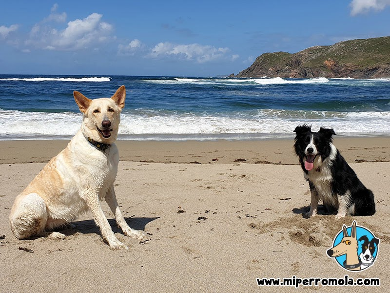 Playa Canina ARNELA en Fisterra
