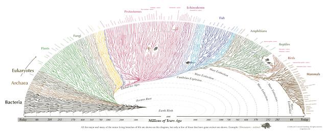 bakış aşısı evrim