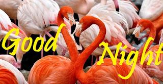 good night love birds