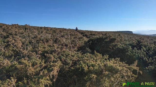 Zona con algo de vegetación previa a Xagó