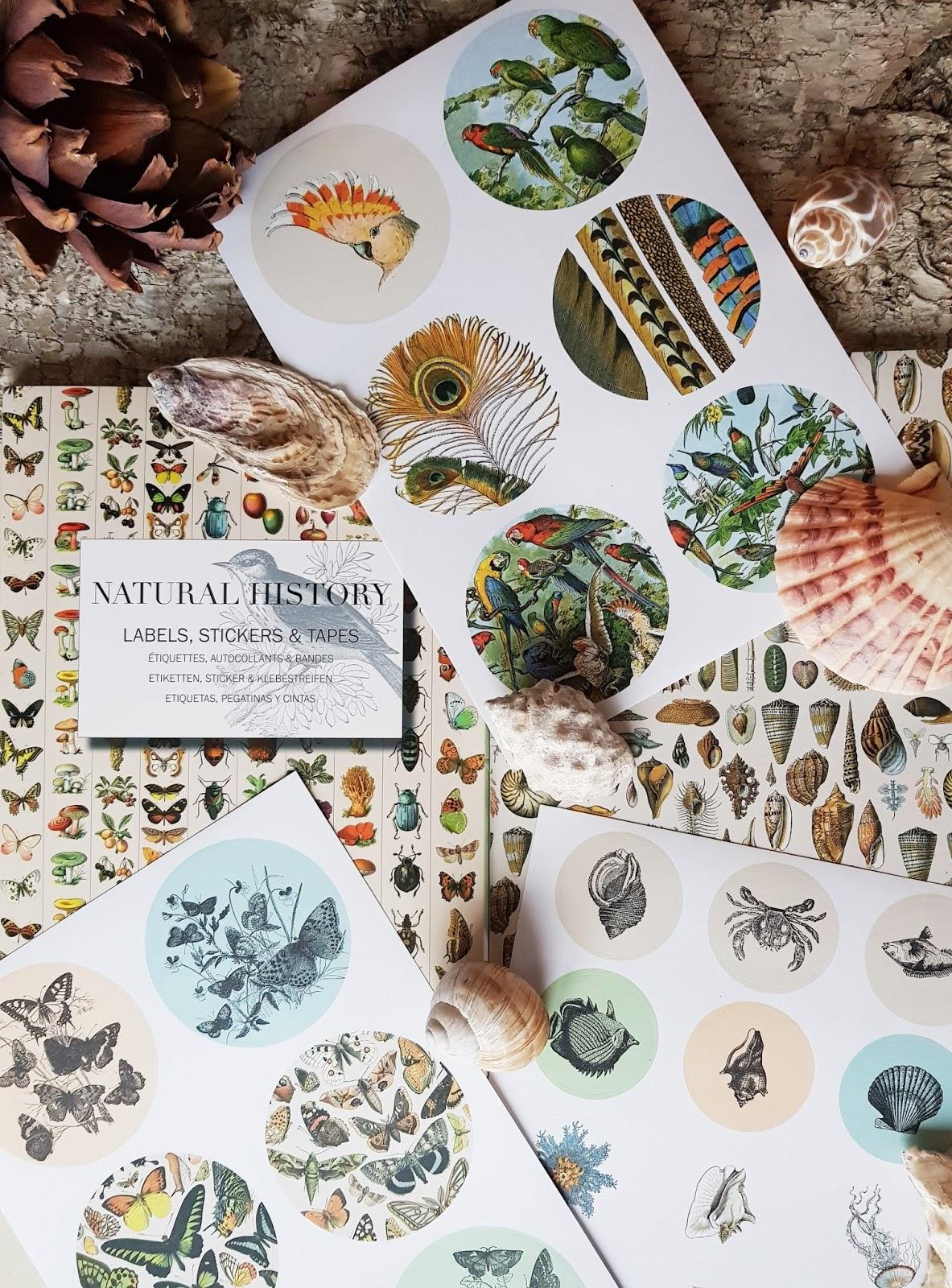 Dekorative Sticker mit botanisch natürlichen Motiven. Natural History mit kreativen Möglichkeiten