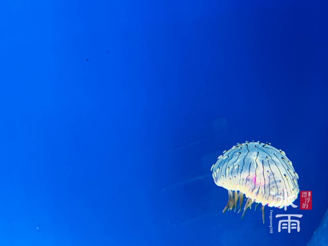 Xpark水族館|癒見水母