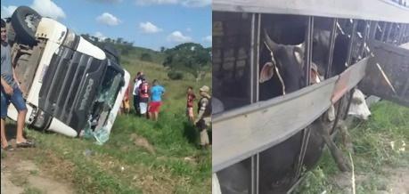 Vídeo: Caminhão carregado com gado tomba na rodovia que liga Macajuba a Baixa Grande