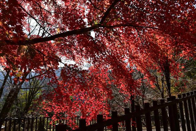城峰公園の紅葉5