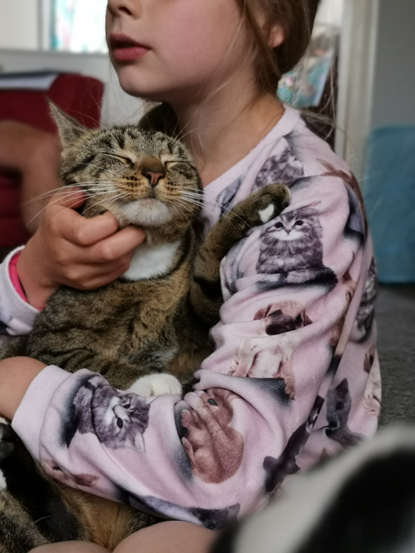 girl wearing pink cat jumper holding tabby cat