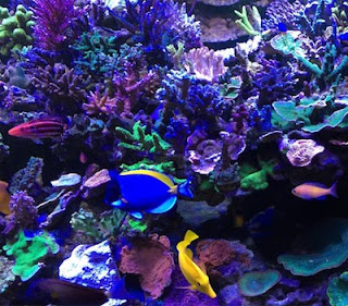 aquarium with purple and blue corals and exotic fish