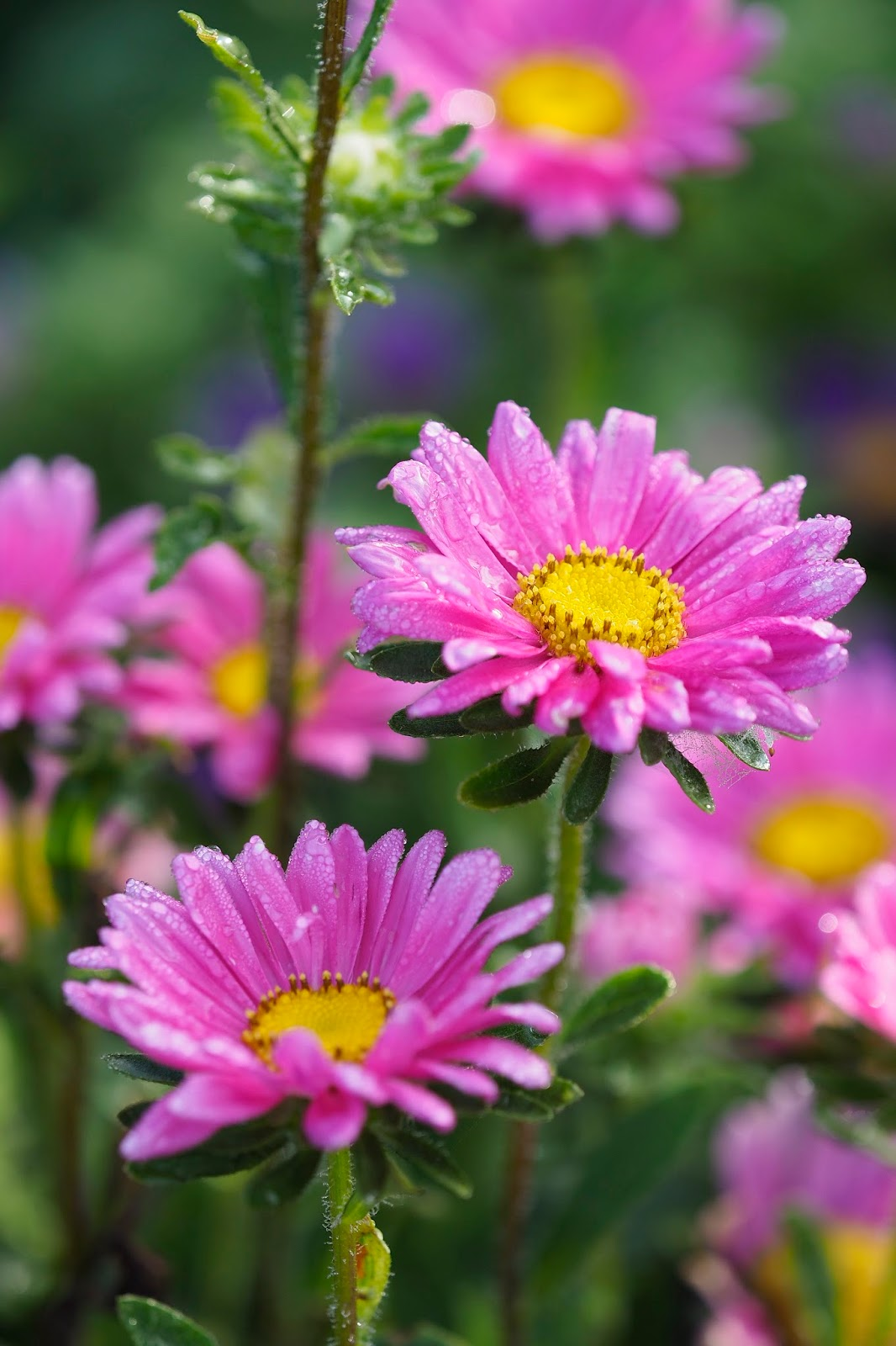 Garden Therapy: Pink Flowers