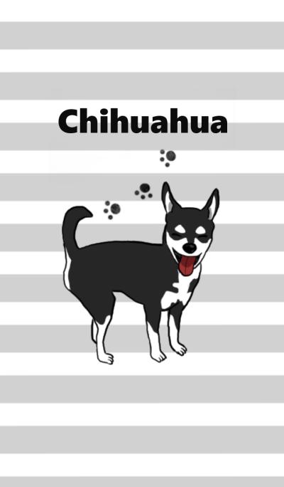 Black chihuahua2
