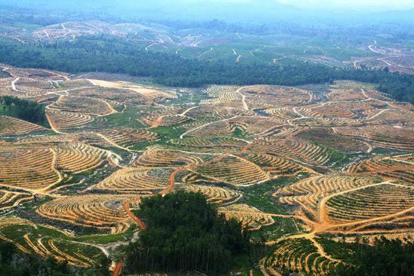 Jutaan Hektar Tanah Disubsidi untuk Memperkaya Taipan, sementara Tanah Pesantren FPI Diributkan