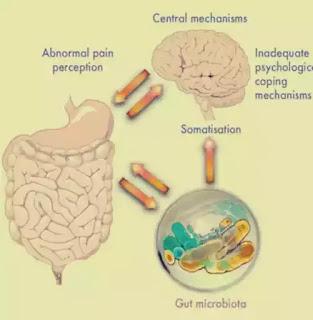 wiki microbiota intestinala si sanatatea creierului si a memoriei