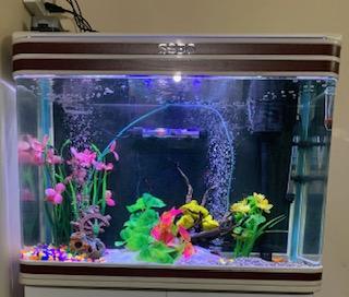 Fish Aquarium Vastu Tips for Home फिश एक्वेरियम वास्तु के टिप्स