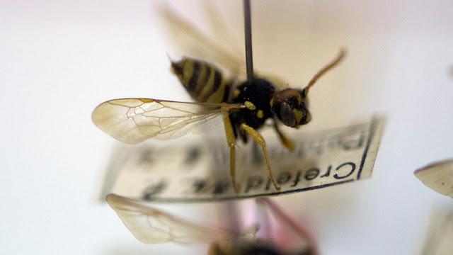 Los insectos enfrentan el mayor peligro de extinción desde la era de los dinosaurios