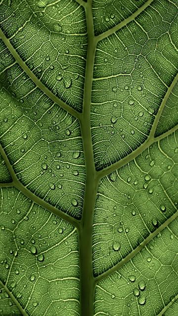 beautiful wallpaper leag veins