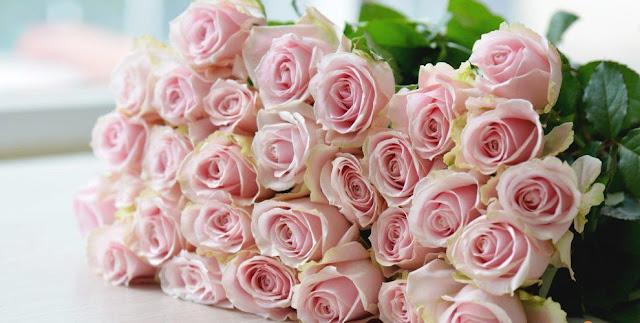 cách bảo quản hoa hồng tươi lâu để bán