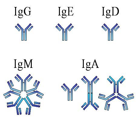 IgM reagente e não reagente (Coronavírus)
