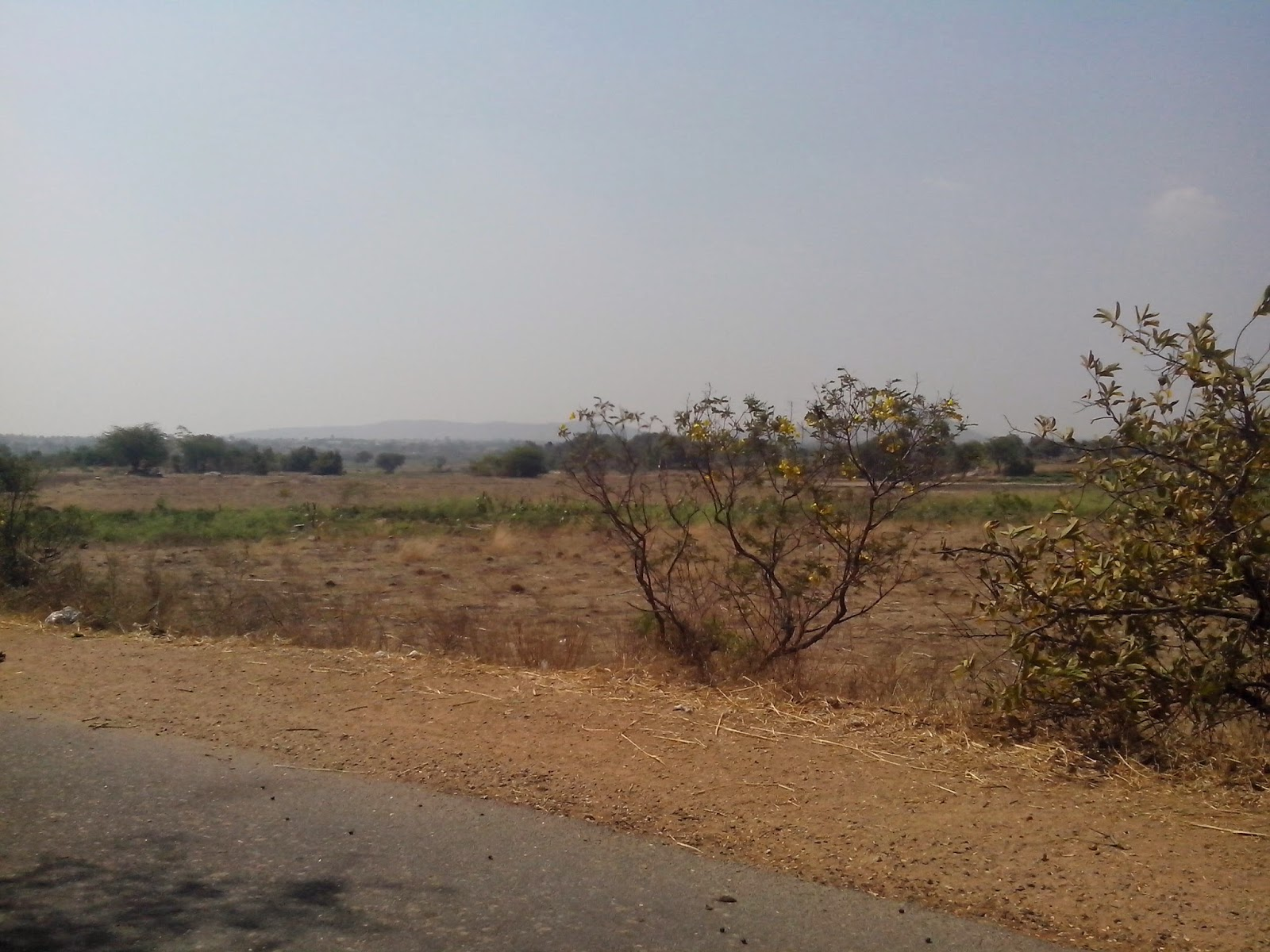 6 Acres Land Agriculture Land For Sale at Pillipally Village