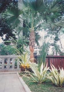Galeri Taman - Tukang Taman Surabaya 95