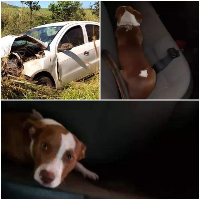Mineiros: Cadela aguarda dono ser socorrido após acidente e é acolhida por motorista de guincho