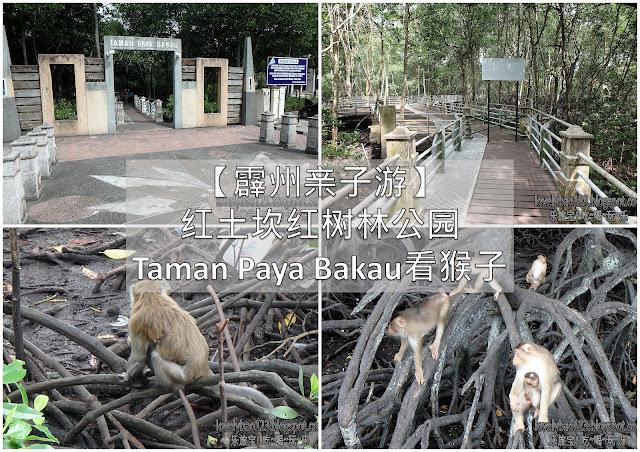 【霹州亲子游】红土坎红树林公园Taman Paya Bakau看猴子