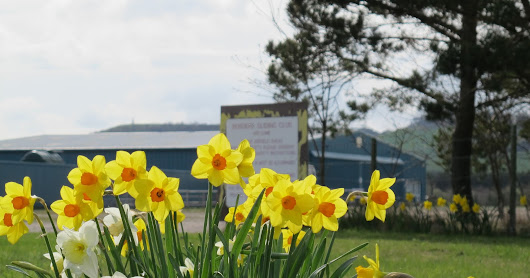 Spring has Arrived at Milfield