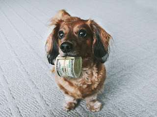 Here Three Surprising Ways to Save Money on Pet Care