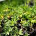 Abbott signs law legalizing hemp, CBD products