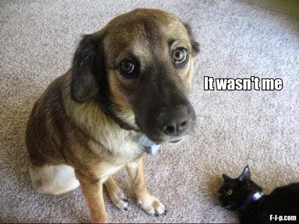 Funny Guilty Dog Dead Cat - It wasn't me