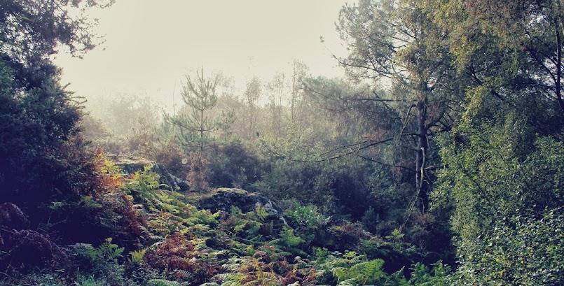Zaczarowany las Brocéliande i wizyta blogerek / La forêt de Brocéliande avec les Breizhblogueuses