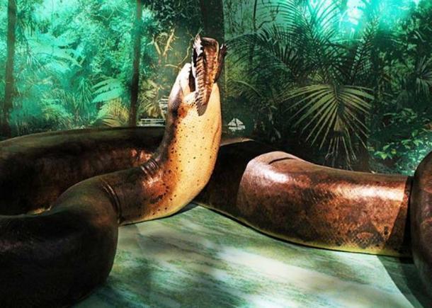 """Il """"Titanoboa: Monster Snake"""" mostra dello Smithsonian al Museo di Storia Naturale."""