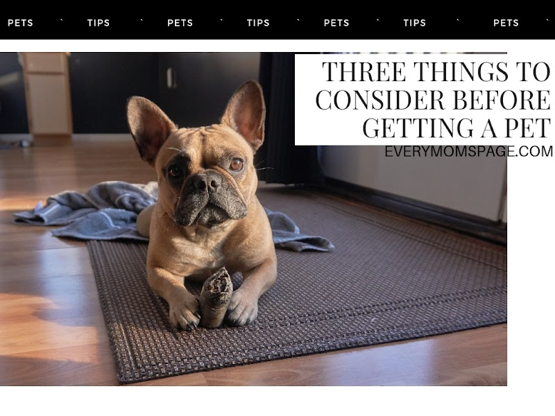 Three Things to Consider Before Getting a Pet