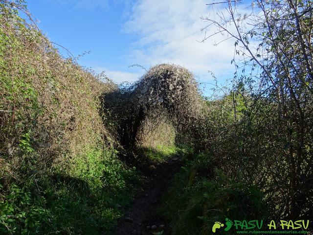 Túnel de vegetación en Careses