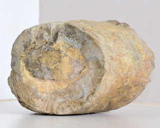 possible rhizolith from Costa Rica