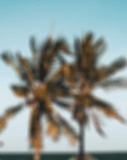 Coconut Tree Blur Background Free Stock Image