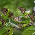 রাতাপানি বন্যপ্রাণী অভয়ারণ্যে প্রজাপতিগুলোকে কাছে থেকে জানার সুযোগ