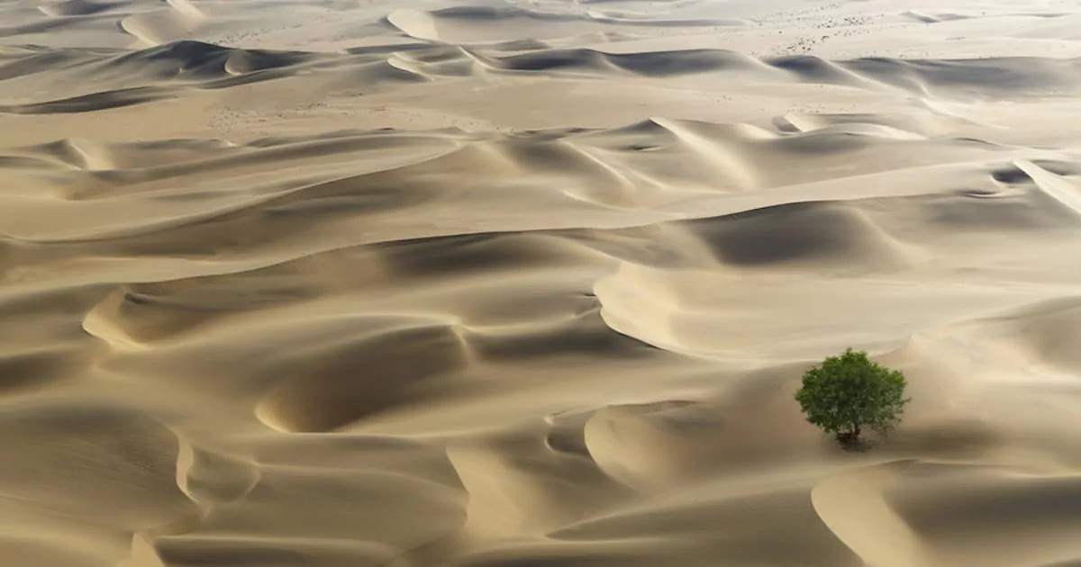 Scientists Discover Deserts Filled With Billions Of Trees Contradicting Previous Research