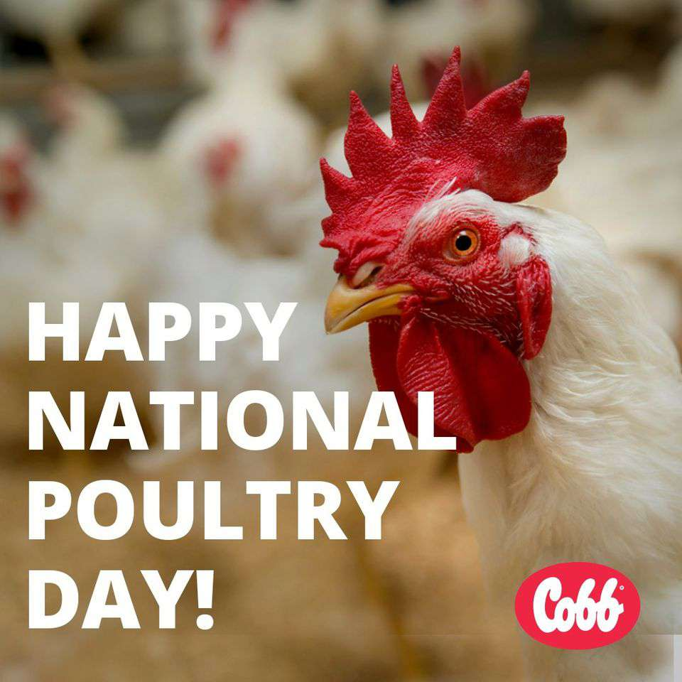 National Poultry Day Wishes for Whatsapp
