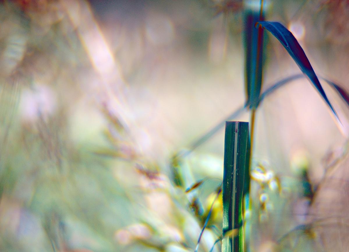 Offenblendiges von meiner Blumenwiese (3)